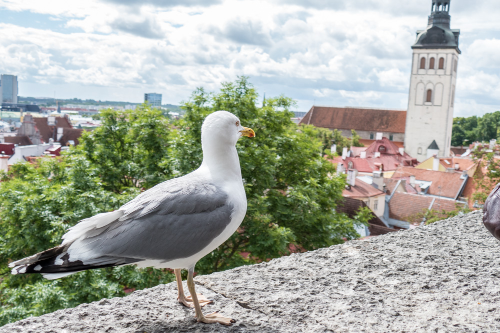 Tallinn, schönste Altstadt des Baltikums