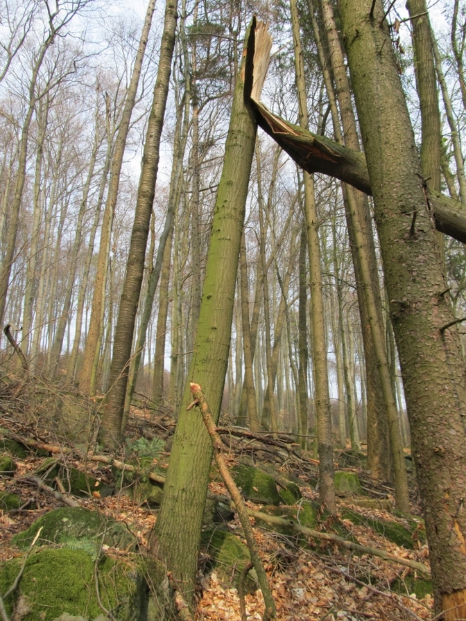 Exempel Baumzerstörung mitgerissener Baum