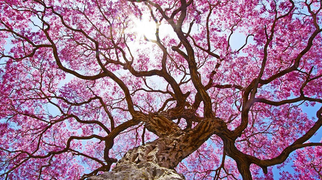 ...erblüht voller schöner Erinnerungen