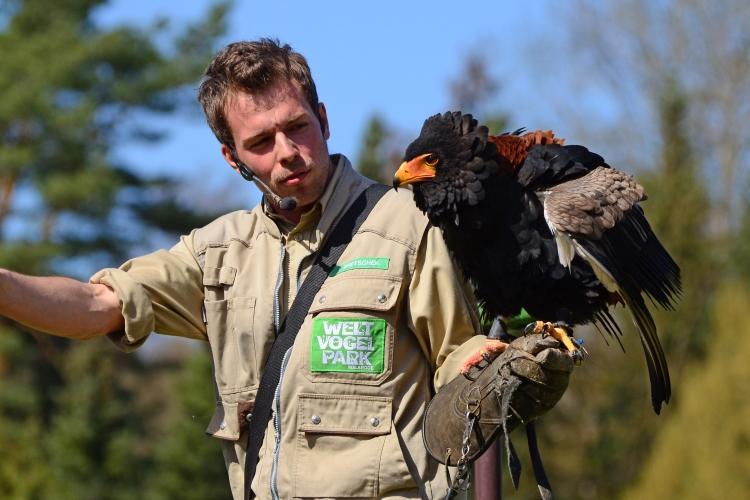 Flugshow im Weltvogelpark Walsrode