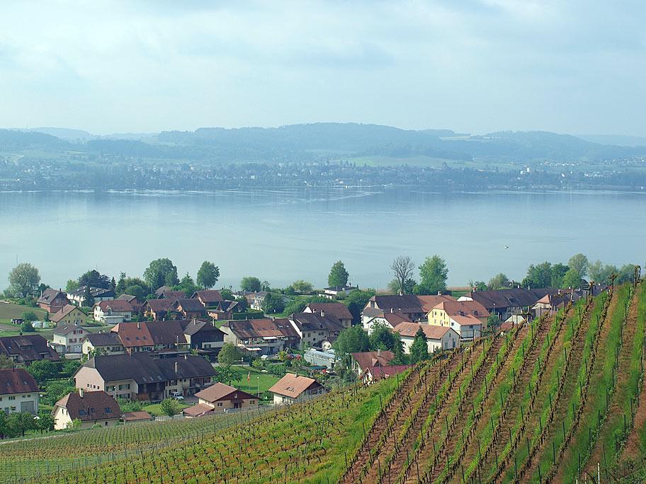 Vully Weinbauregion