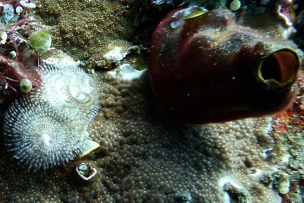 Röhrenwürmer und Seescheide