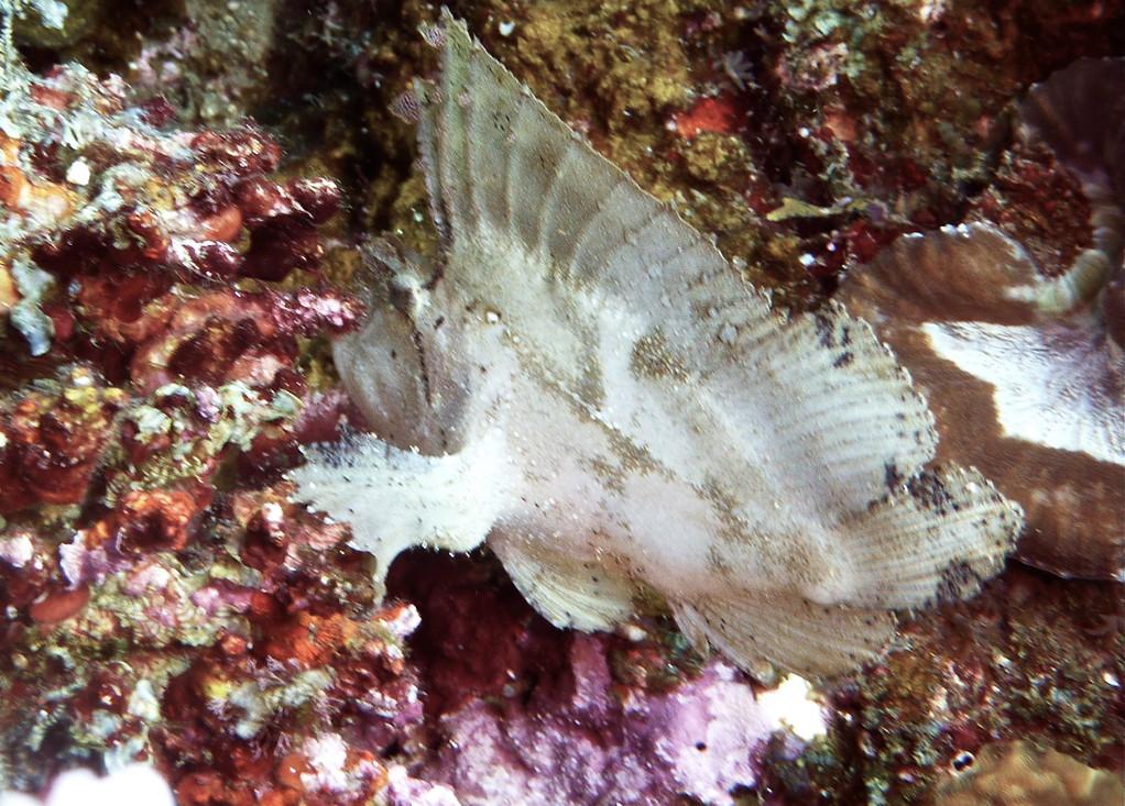 weisser Schaukelfisch