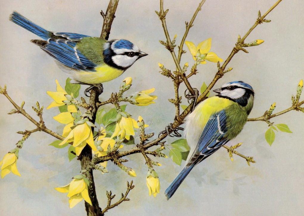 Вышивка лентами птички