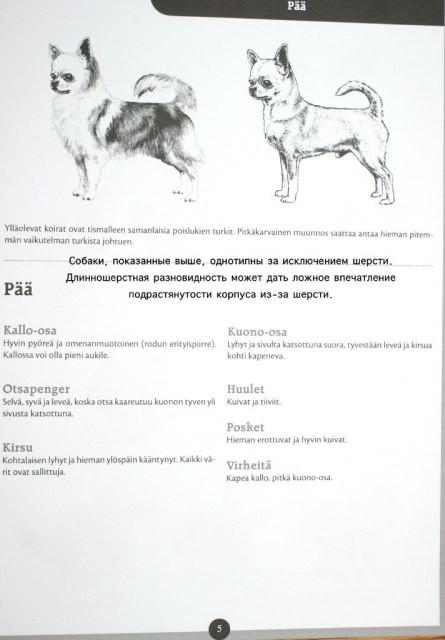 Картинки с собачками чихуахуа наряжайте, отличная