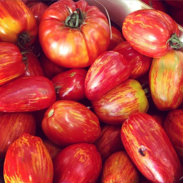 Trago como curiosidade estes maravilhosos tomates orgànicos que encontro sempre no Marche Provençal de Antibes. Nào sào uma jòia?