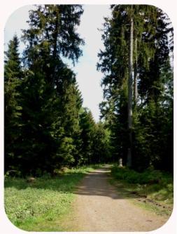 Wanderweg am Wurmberg Braunlage