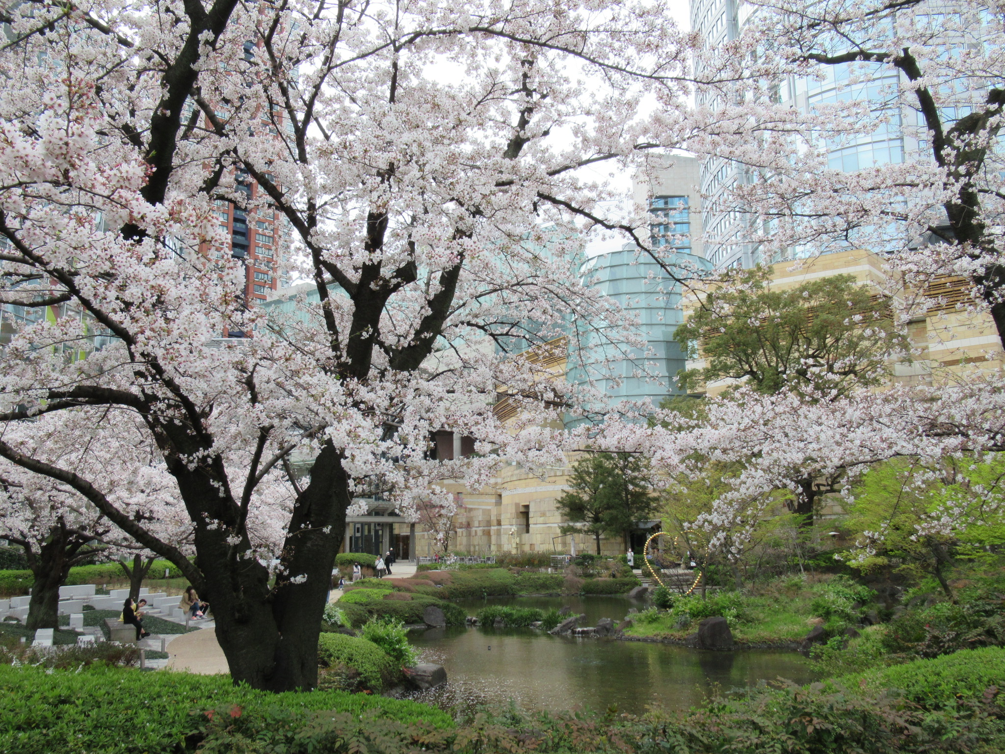 六本木 毛利庭園の桜