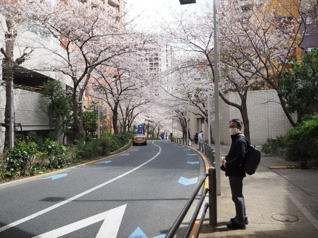 【六本木さくら坂】外国人が集う都心の隠れたすばらしい桜並木