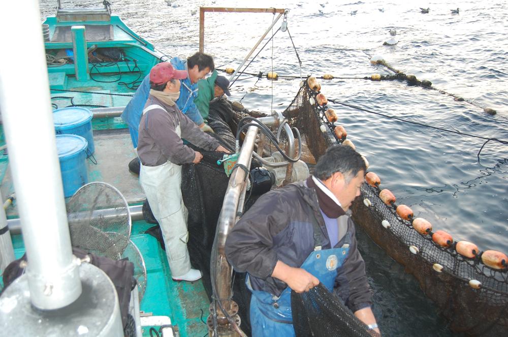海岸部では漁業が盛んです。豊かな熊野灘の幸が獲れます。