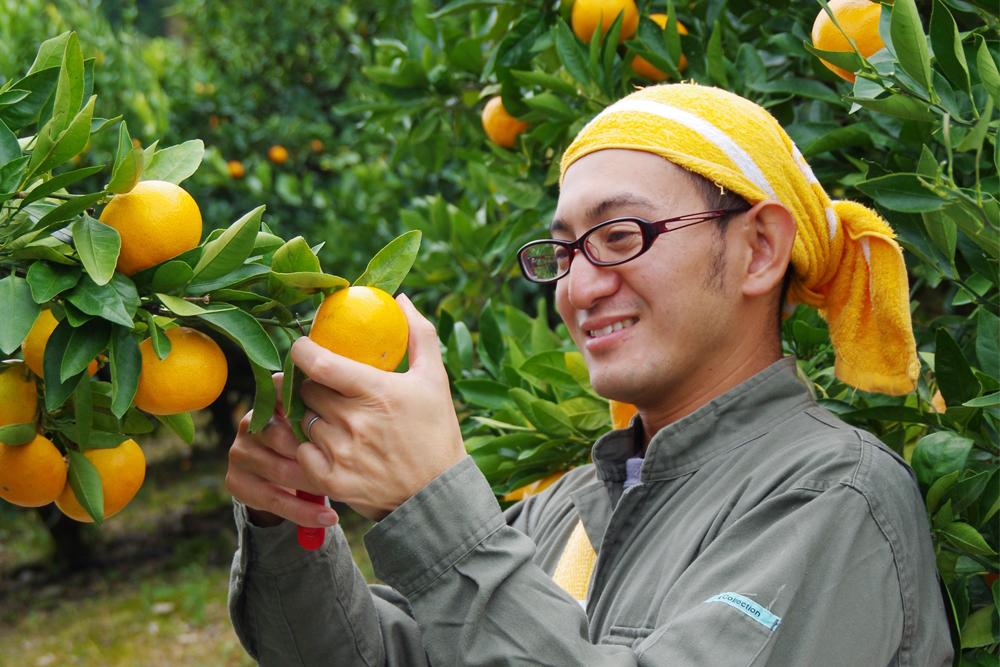金山町はみかんの就農におすすめの地区です。熊野市では新規就農応援制度もあります。