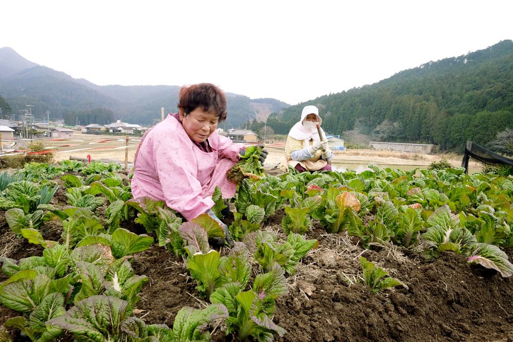 農業も盛んで、特に高菜が名産品です。
