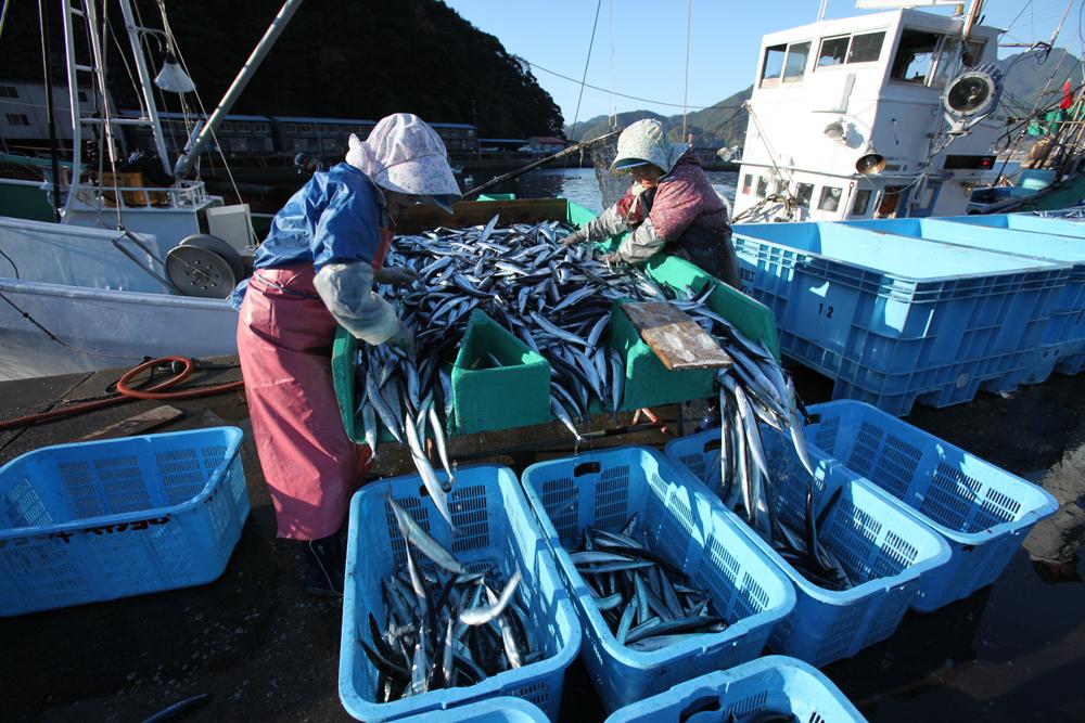 シーズンになるとサンマ漁が盛んになります。