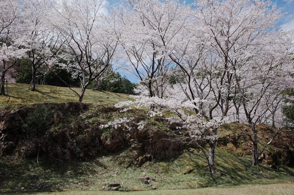 桜の名所でもあり、春になると町中が桜色に染まります。