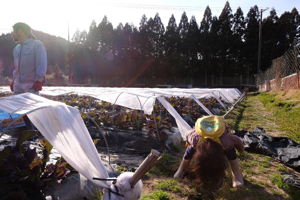熊野市では新規就農の応援制度があります。