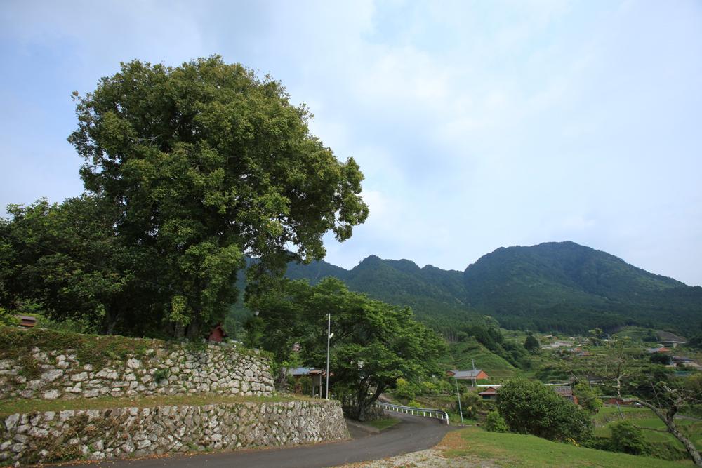 紀和町西山地区の景色です。