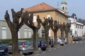 Molto spesso le capitozzature riguardano interi filari; gli alberi così ridotti non sono più in grado di fornire tutti quei benefici per i quali sono stati piantati.