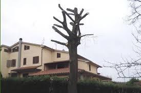Esempio di capitozzatura in ambiente urbano; l'albero risulta ''snaturato'' e non svolge più alcuna funzione ecologica e ornamentale.