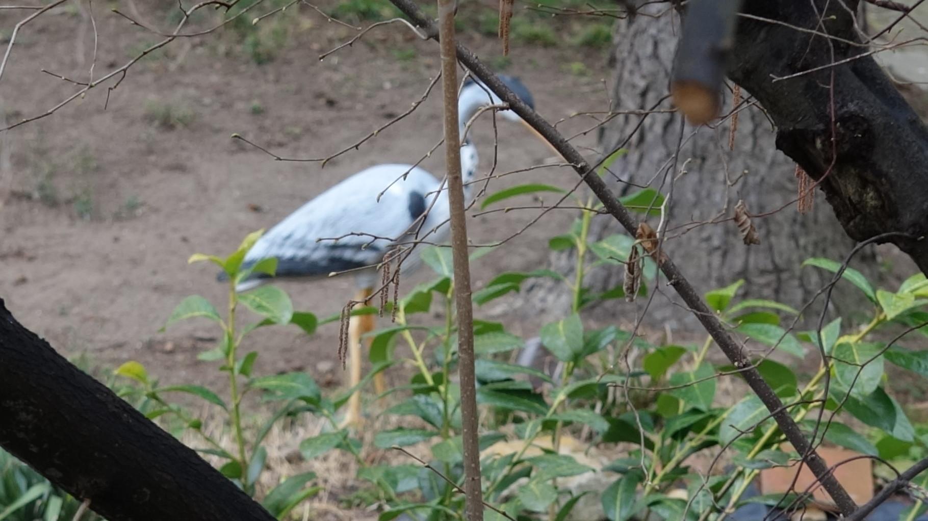 Dieser Graureiher stand in einem Garten - ist aber nicht echt :-)