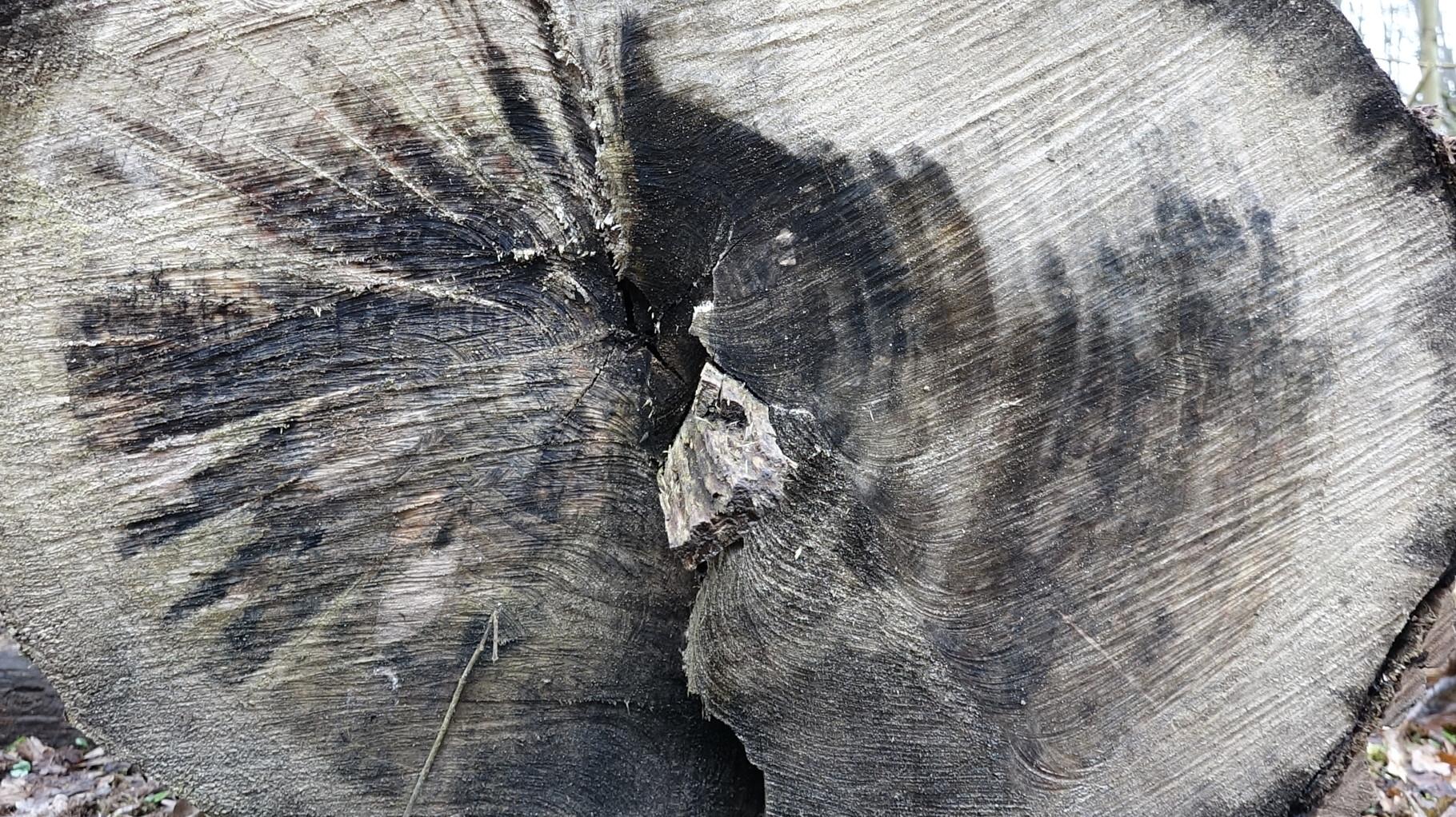 Wie alt ist wohl dieser Baum?