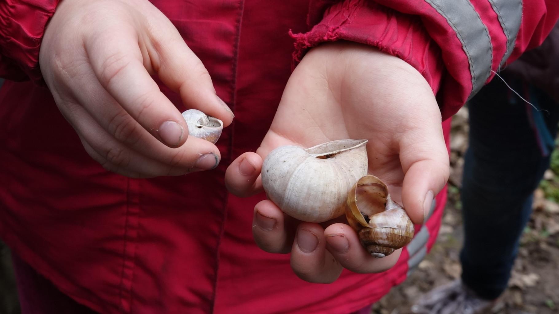 Eine kleine Schneckenfamilie oder das was von ihr übrig blieb.