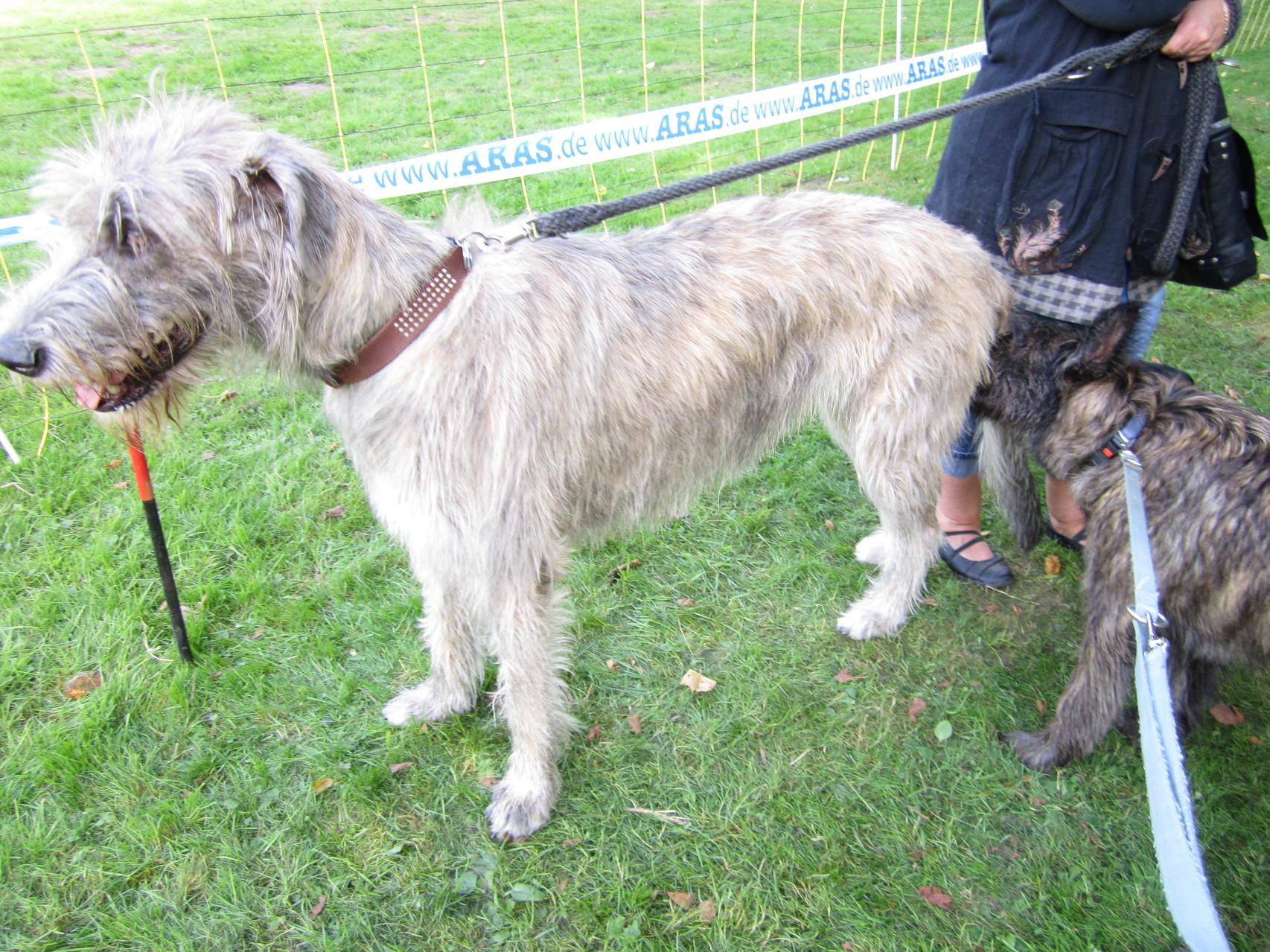 Tag des Hundes im Unna Kurpark 2012