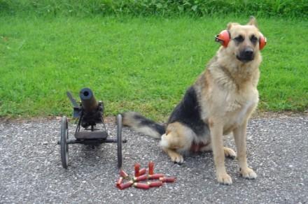Der arme Hund!