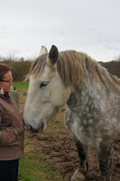 Tina du Seuil, adoptée par Maelle en 2009