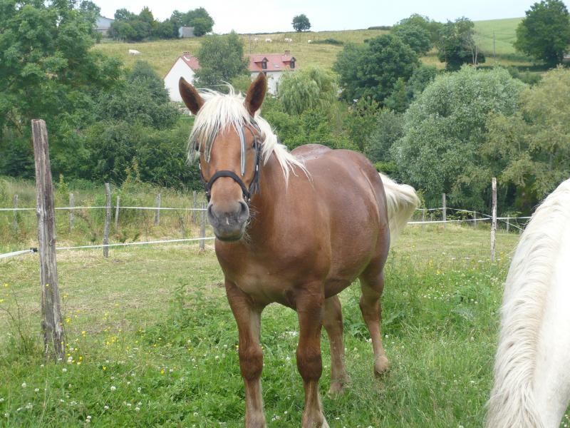 Lulu, adoptée par Amandine en 2009