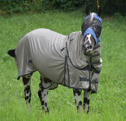 Dakota espère passer inaperçu en cheval masqué !