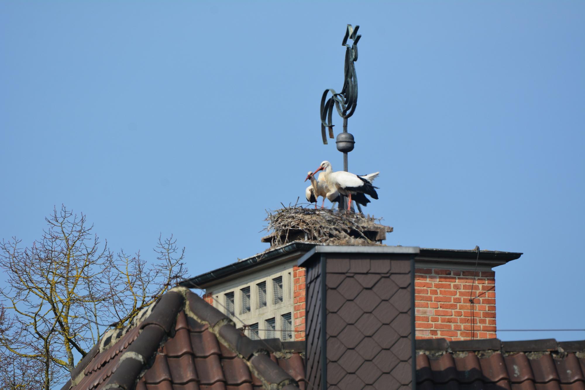 Wabern V, dort sind immer wieder die schwersten Kämpfe zu beobachten. Auf dem Dach versuchten Störche zu bauen, das Material hielt aber nicht.  Ein weiterer Kunsthorst wurde aufgestellt.