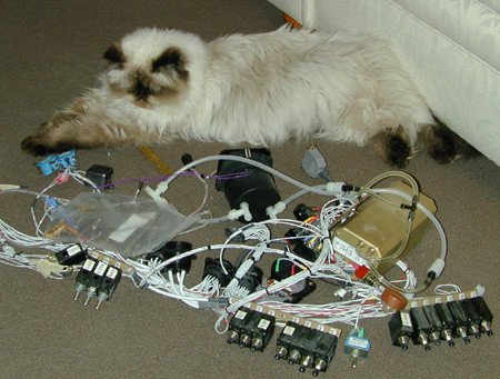 My quality controller inspecting the wiring. I don't think he was impressed.