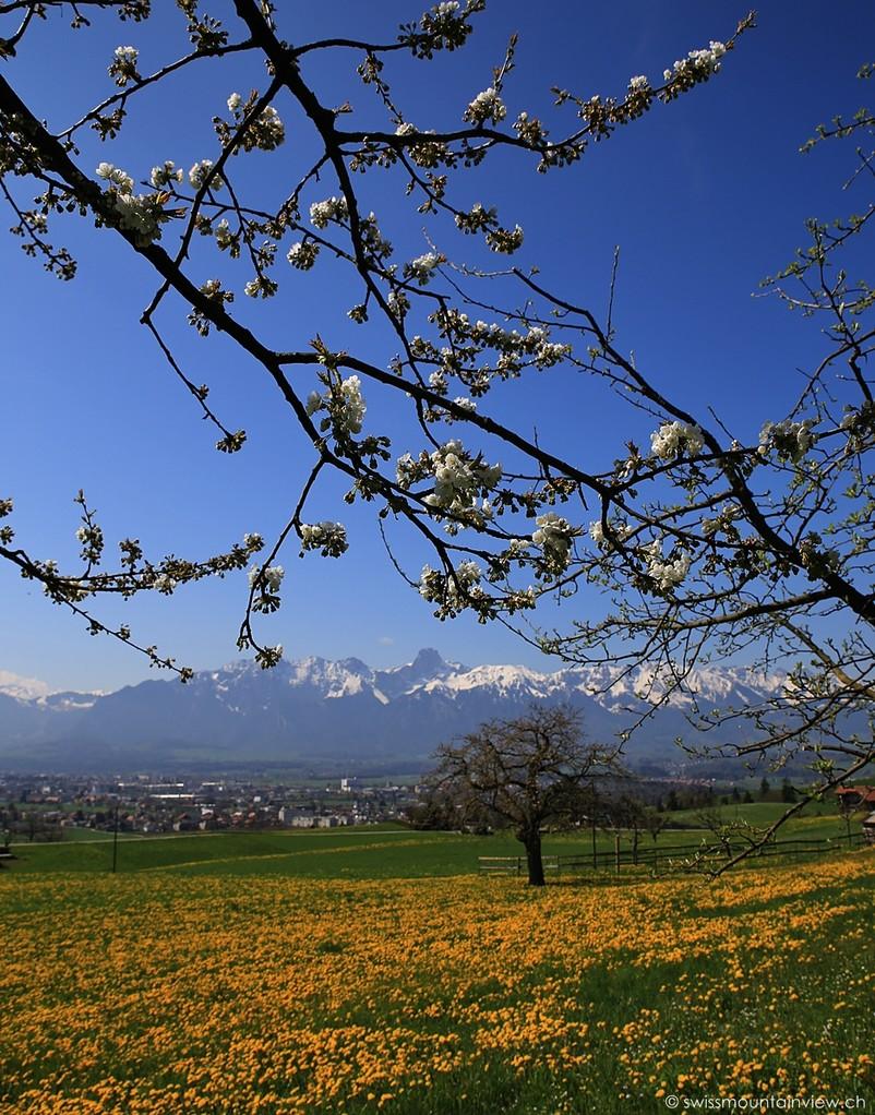Steffisburg bei Thun, Blick auf Stockhornkette, Berner Oberland - Bernese Oberland