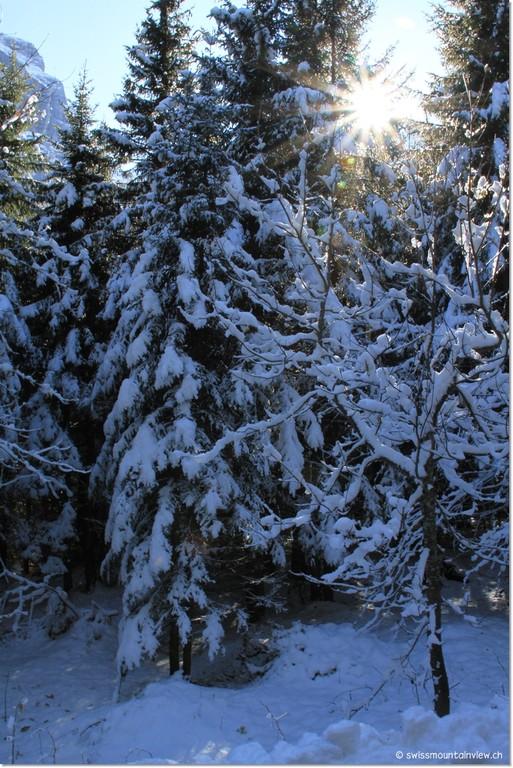Tief verschneit ist er, der Tannenwald... allein stapfen wir den Hang hoch.
