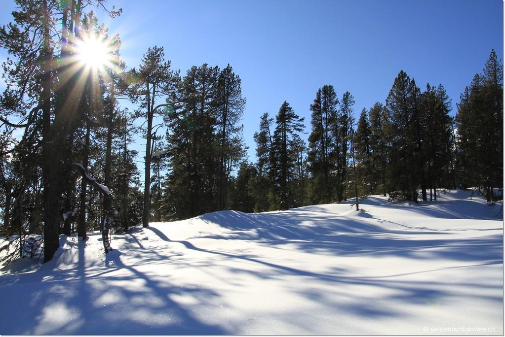winter beauty..