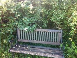 eine Bank zum Ausruhen im Garten
