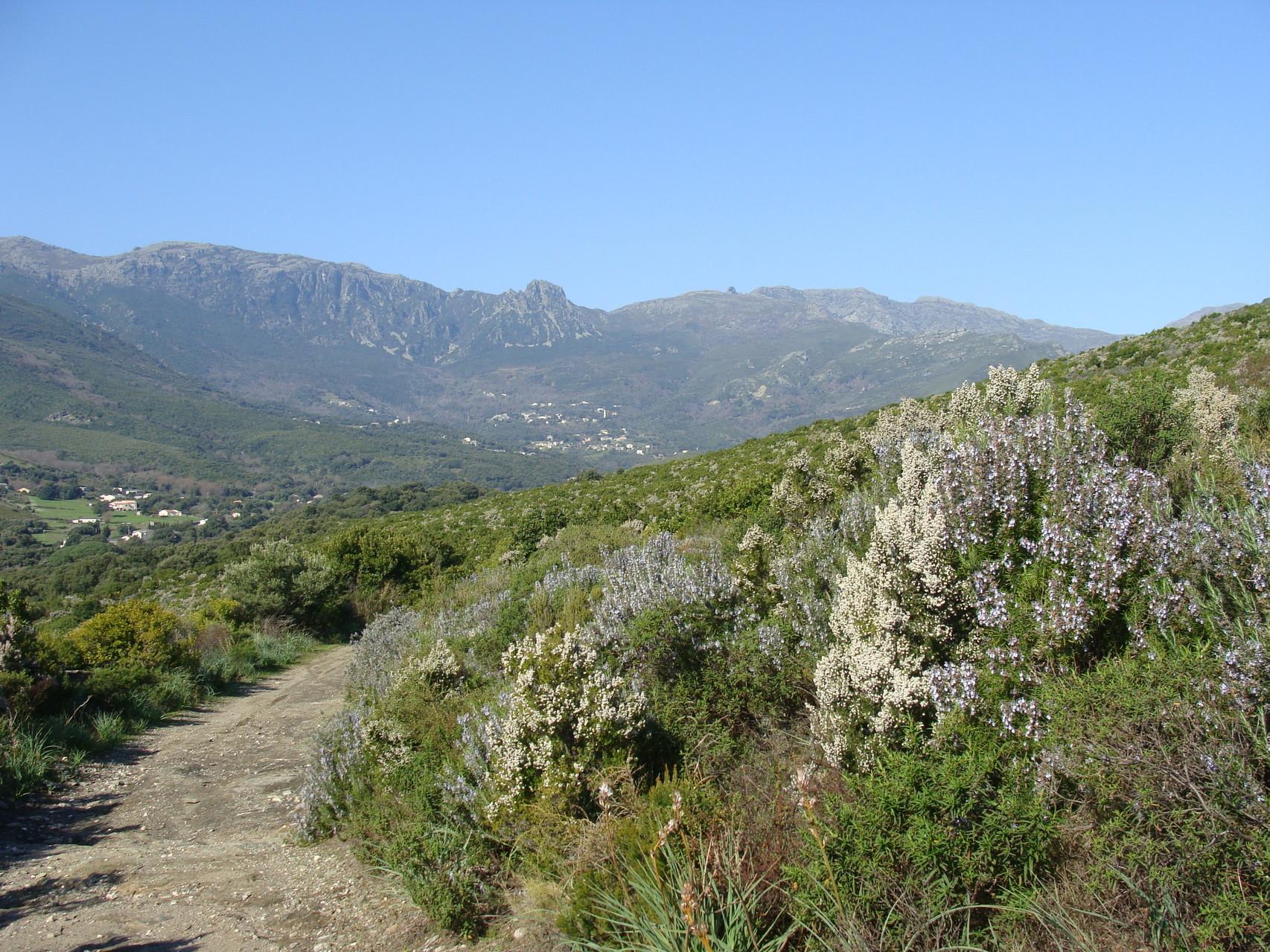 Vallée de Sisco,Cap Corse