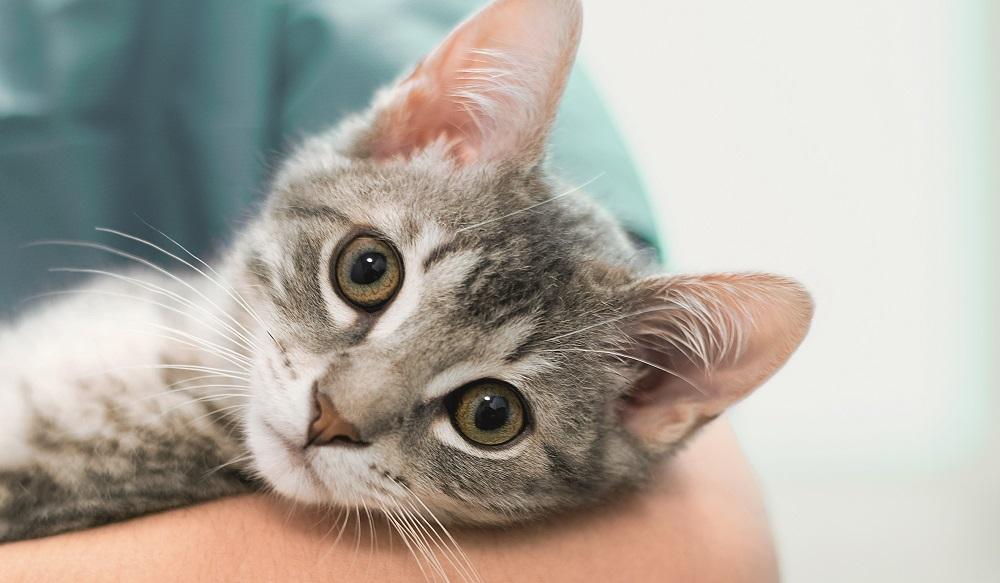Tierkrankenversicherung Katze beim Tierarzt