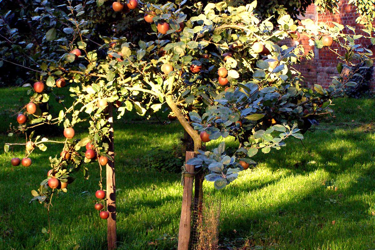 Ab Oktober wachsen rote Äpfel direkt hinter dem Ferienhaus
