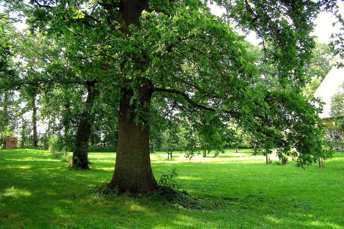 Das Grundstück ist von alten Eichen, Weiden und Eschen umgeben.