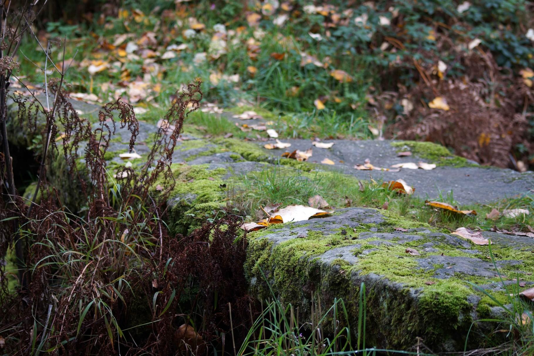 Vallée du Douron en novembre 2