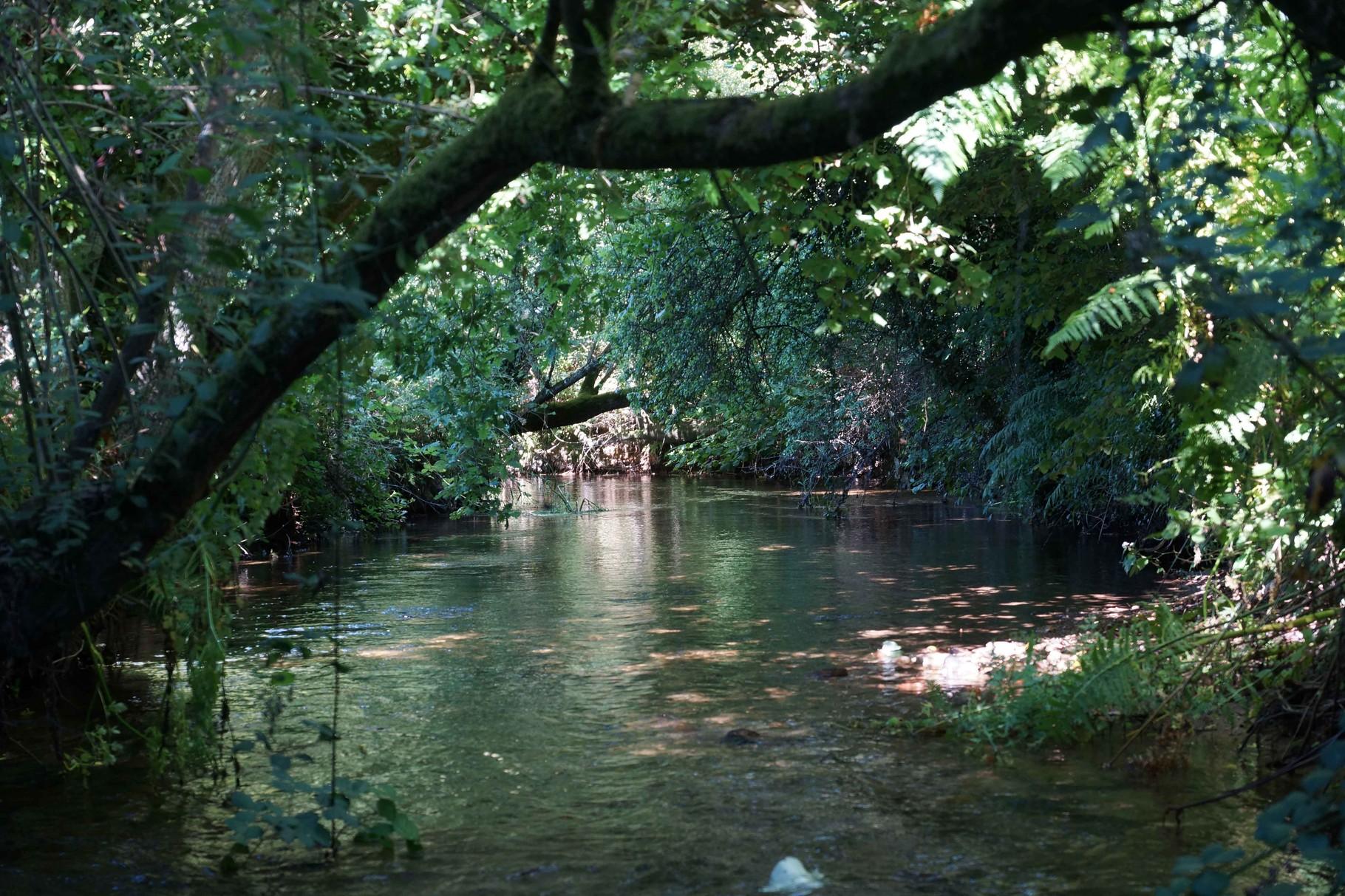 Vallée du Douron, Plouégat Moysan 19 (Pont Ar Forest)