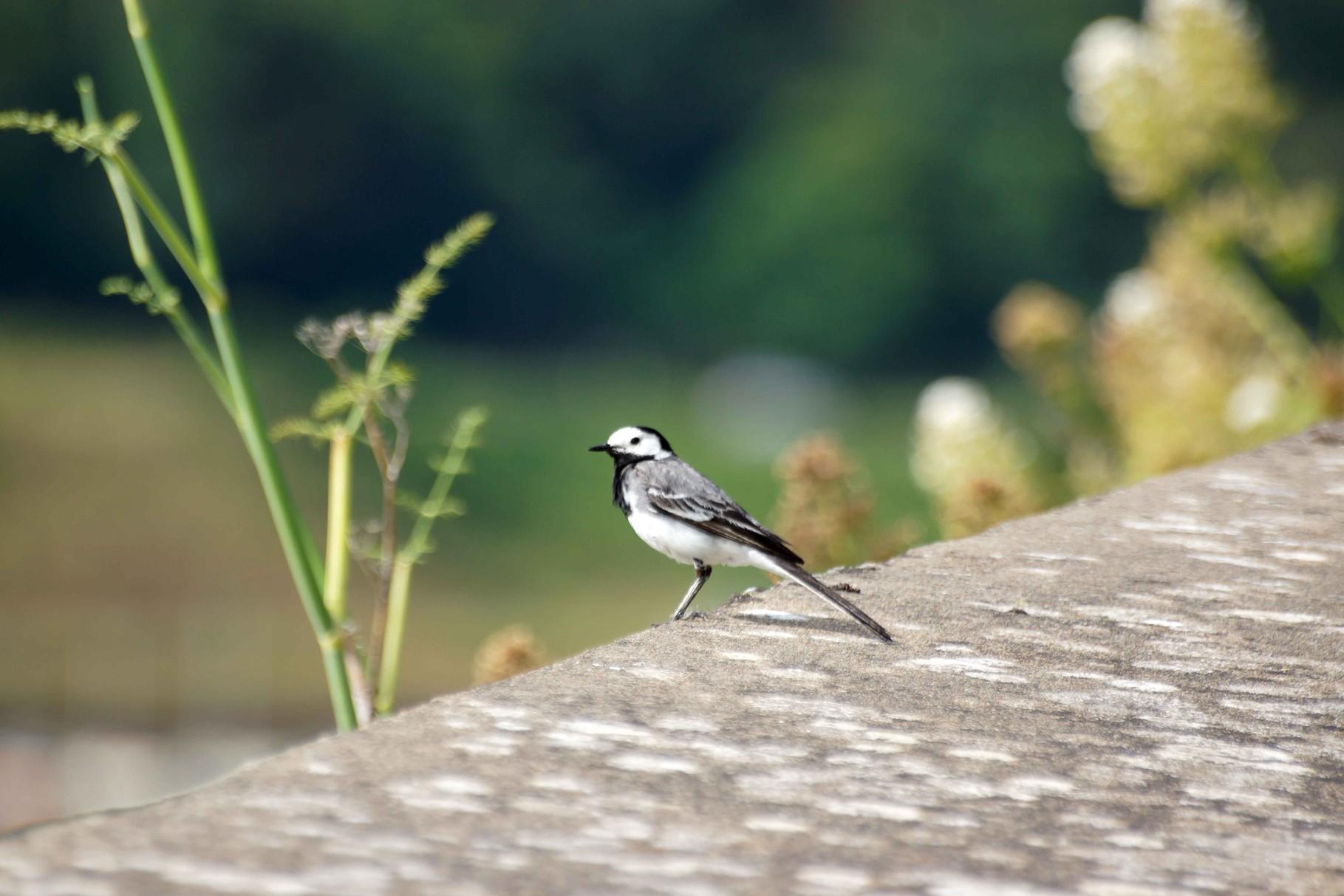 Oiseau au centre ville de Saint Brieuc