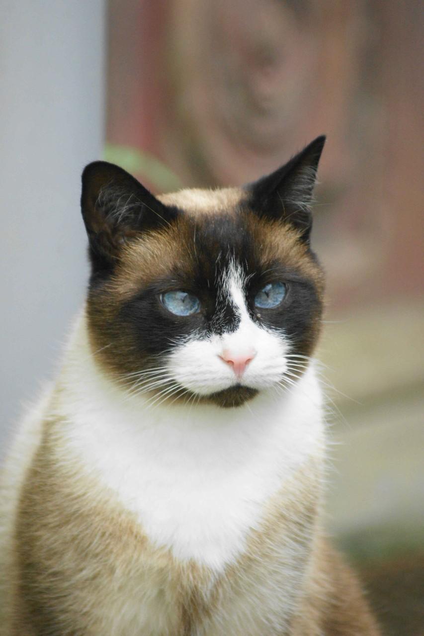 Le chat de Locquénolé