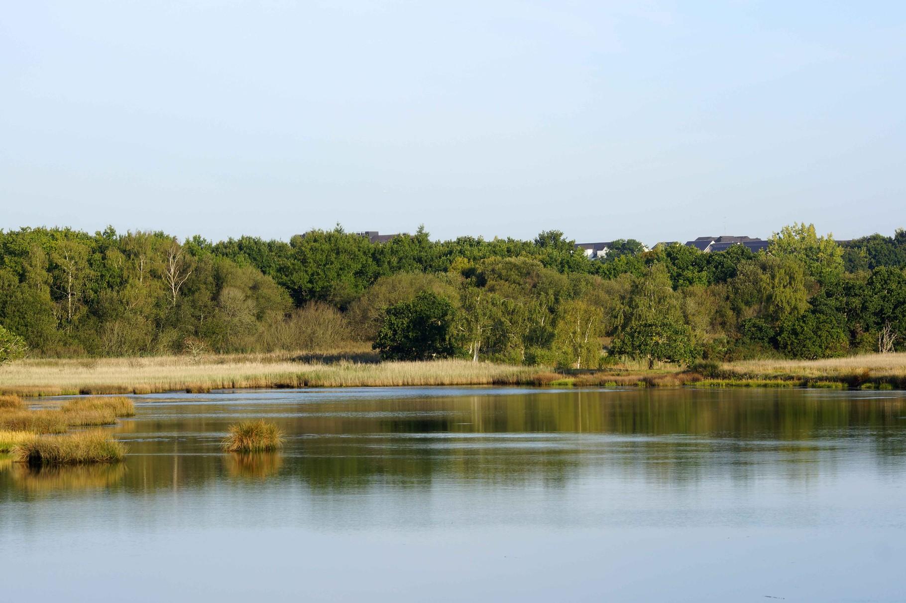 Marais de Conleau 2