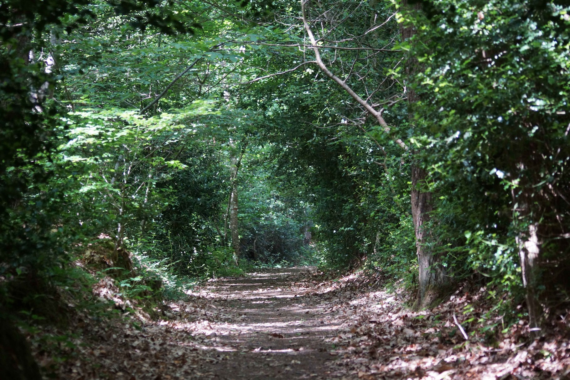 Chemin de Saint Sébastien de Plestin