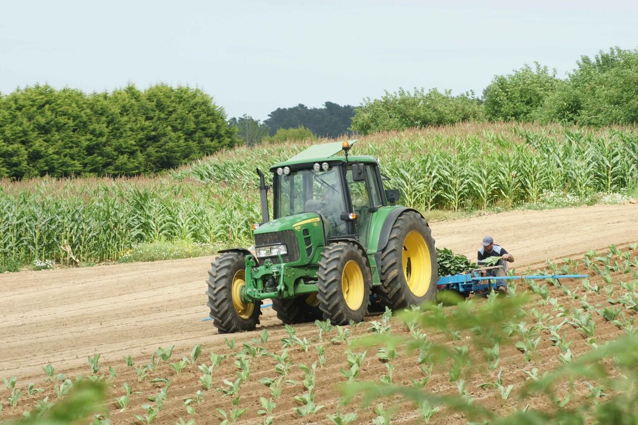 Scènes agricoles