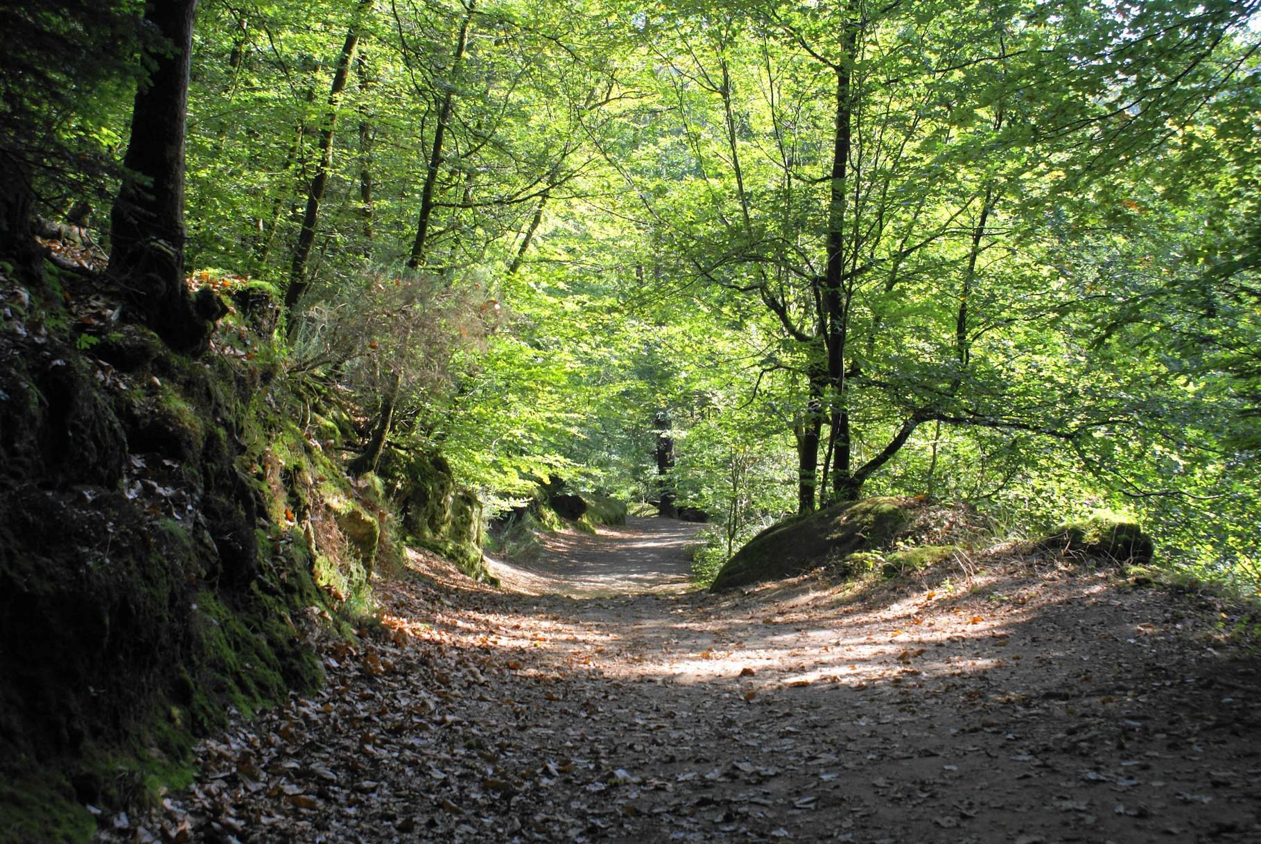Forêt du Huelgoat