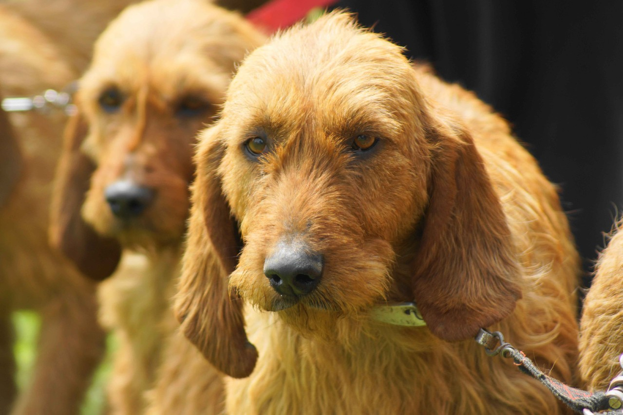 Portrait de chien et d'animaux de ferme ou de compagnie