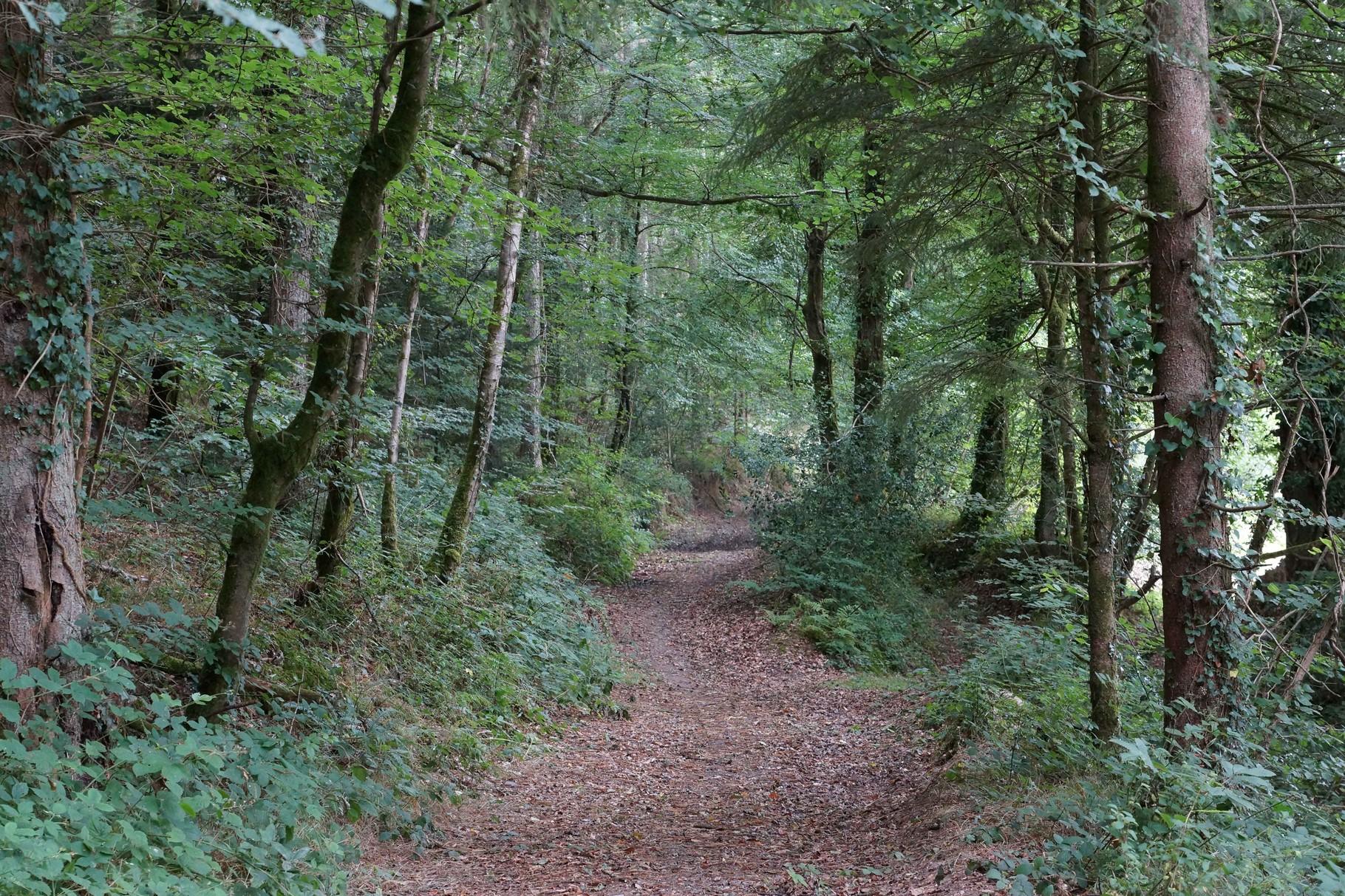 Chemin Forestier de Kerathanase, Plouégat Moysan